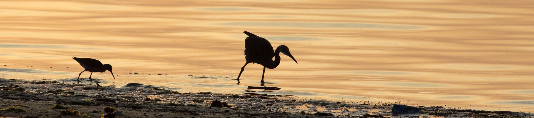 birdwatcher.cz