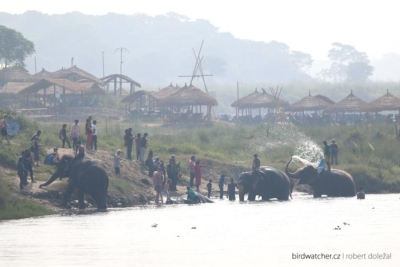 elephant_bath0446
