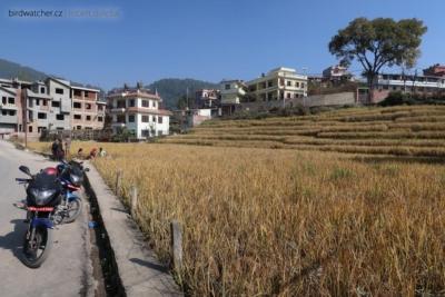 kathmandu4176